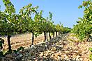 Cairanne, Vignoble sur galets