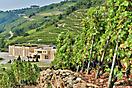 Cave Vidal-Fleury au pied des terrasses